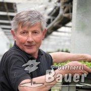 Wolfgang Bauer, sen.Chef