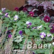 Mustergrab Ring lila