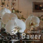 Orchidee weiß