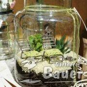Mini Gardening in Glas
