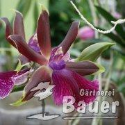 Orchideenwoche