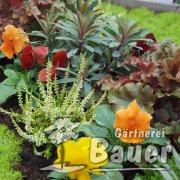 Mustergrab Herbst