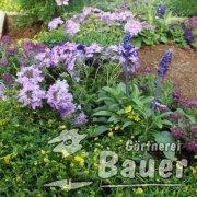 violet-blau